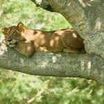 Queen-Elizabeth-Nationalpark