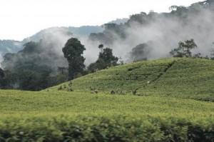 Die beste Reisezeit für eine Reise nach Uganda